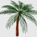 椰子の木モデル